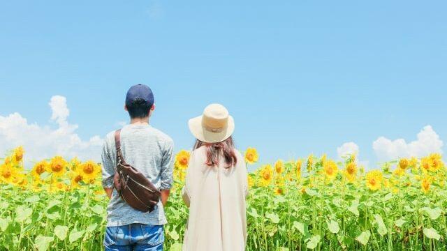 ひまわり畑を眺めるカップル